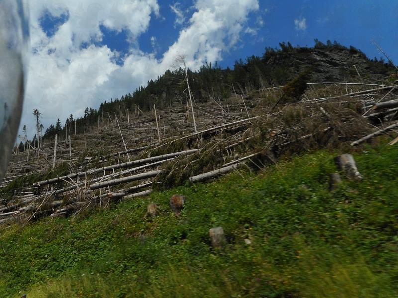 Waldschäden in Südtirol 2019